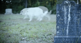Are Pet Ghosts Real?